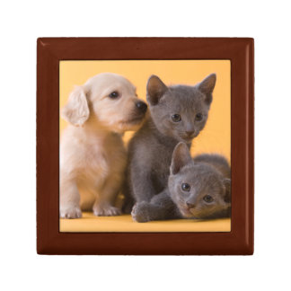 Two Russian Blue Kittens And Two Dachshund Puppies Gift Box