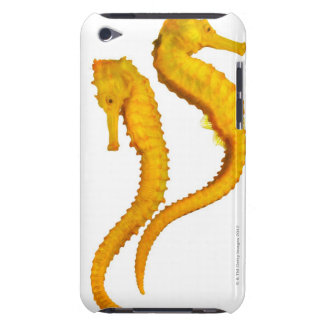 Two Sea Horses shoot on a white background in a Barely There iPod Case