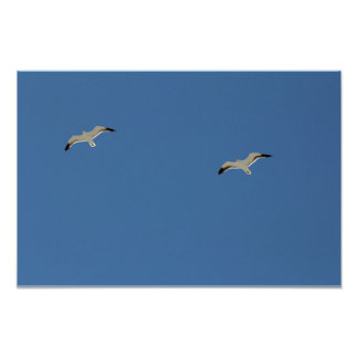 Two seagulls flying A3 Poster