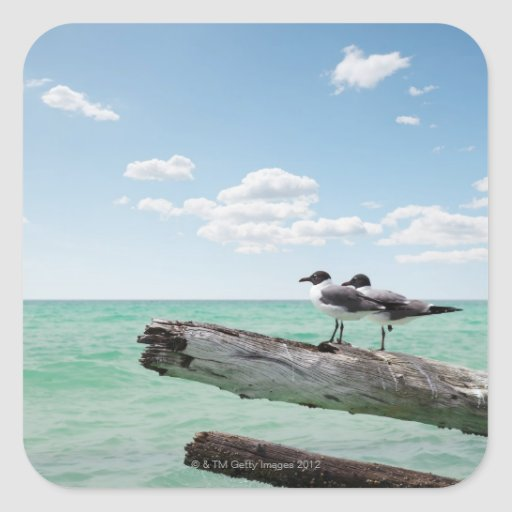 Two seagulls sitting on a dead tree sticking out sticker