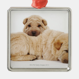 Two Shar Pei puppies sleeping, studio shot Silver-Colored Square Decoration