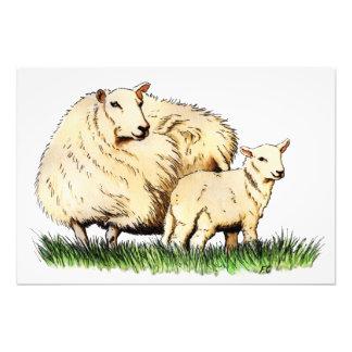 two sheep animal photo print