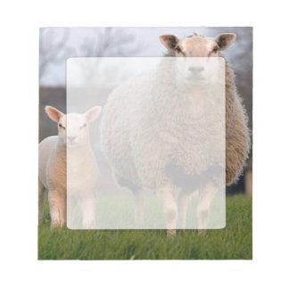 Two Sheep in Field Farmers Blank Paper Notepad