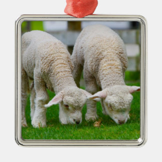 """""""Two Sheep"""" Ornament"""