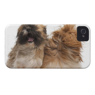 Two Shih-Tzus in the wind iPhone 4 Case-Mate Case