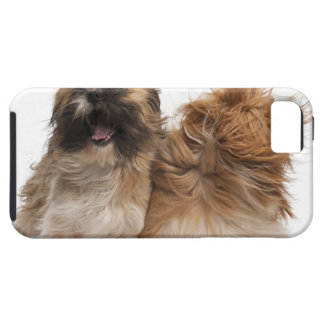 Two Shih-Tzus in the wind iPhone 5 Covers