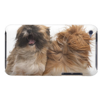 Two Shih-Tzus in the wind iPod Touch Covers