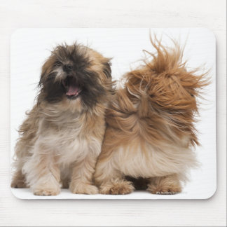 Two Shih-Tzus in the wind Mouse Pad