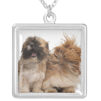 Two Shih-Tzus in the wind Silver Plated Necklace