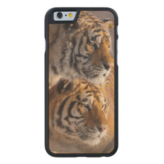 Two Siberian tigers together, China Carved Maple iPhone 6 Case
