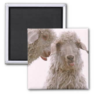 Two Silly Goats Magnet