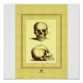 Two Skulls Poster