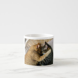 Two Sleeping Tabby Cats Cuddling Espresso Cup