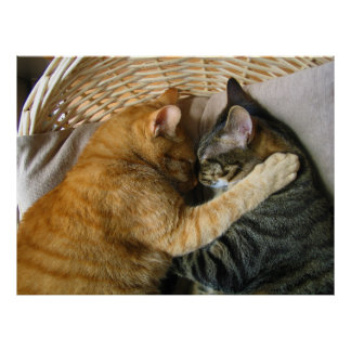 Two Sleeping Tabby Cats Cuddling Posters