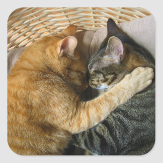 Two Sleeping Tabby Cats Cuddling Sticker