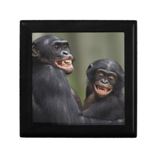 Two smiling Bonobos Gift Box