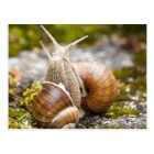 Two Snails Postcard