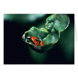Two-spot Ladybird Card