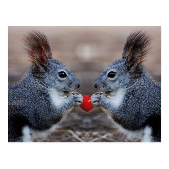 Two squirrels holding a read heart postcard