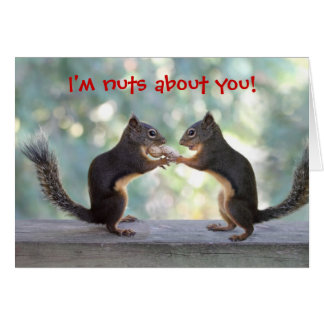 Two Squirrels Sharing Card Greeting Cards