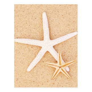 Two Starfish on a Beach Postcard