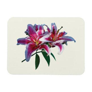 Two Stargazer Lilies in Sunshine Flexible Magnet