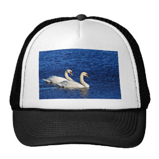 Two Swans In Water Cap