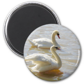 Two Swans Magnets