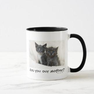 Two tabby kittens mug