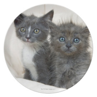 Two tabby kittens plate