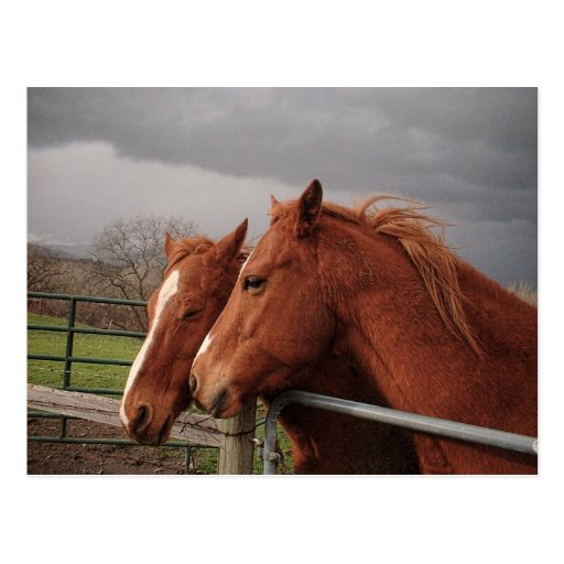 Two Tan Coloured Horses Post Cards