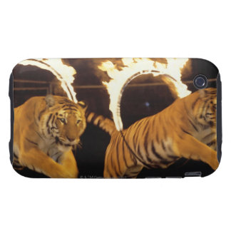 Two tigers leaping through burning rings of fire iPhone 3 tough covers