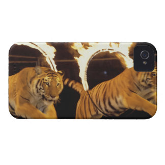 Two tigers leaping through burning rings of fire iPhone 4 Case-Mate case