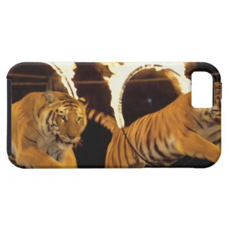 Two tigers leaping through burning rings of fire iPhone 5 covers