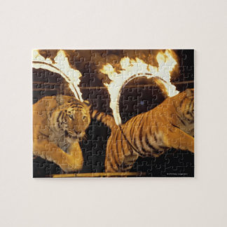 Two tigers leaping through burning rings of fire jigsaw puzzle