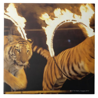 Two tigers leaping through burning rings of fire tile