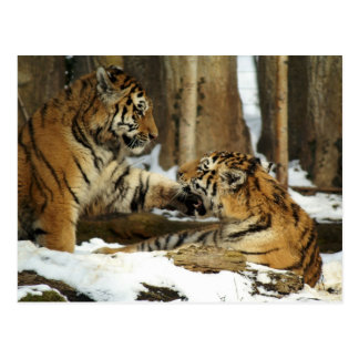 Two Tigers Post Card