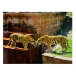 Two Tigers Print