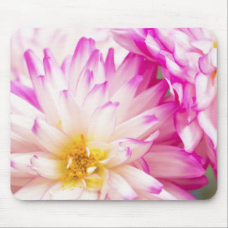 Two Tone Pink And White Dahlia Mouse Mat