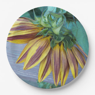 Two Tone Sunflower Head Floral Paper Plate