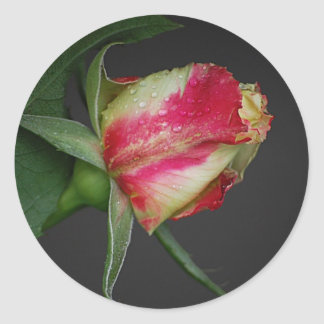 Two Toned Rosebud Sticker
