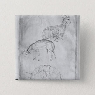Two tortoises, goat and sheep 15 cm square badge