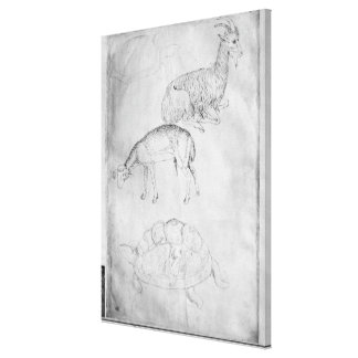 Two tortoises, goat and sheep canvas print