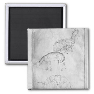 Two tortoises, goat and sheep square magnet
