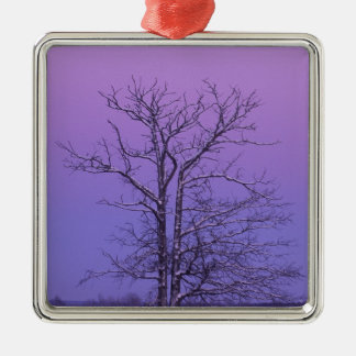 Two Trunked Tree at Sunrise; Chippewa County, Silver-Colored Square Decoration