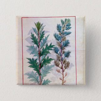 Two varieties of Artemesia 15 Cm Square Badge