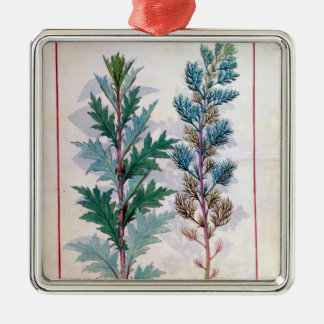 Two varieties of Artemesia Christmas Ornament