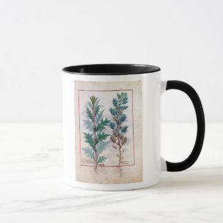 Two varieties of Artemesia Mug