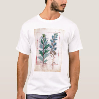 Two varieties of Artemesia T-Shirt