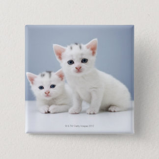 Two very young white kittens stare inquisitively 15 cm square badge